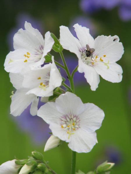 001_blomma
