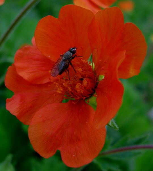 002_insekt