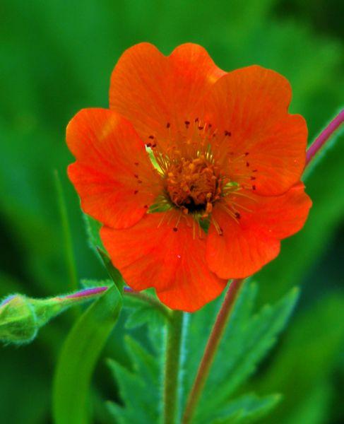 003_blomma