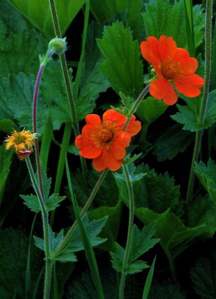 004_blomma
